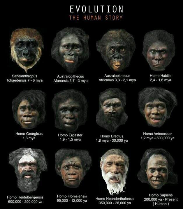 a history of human evolution